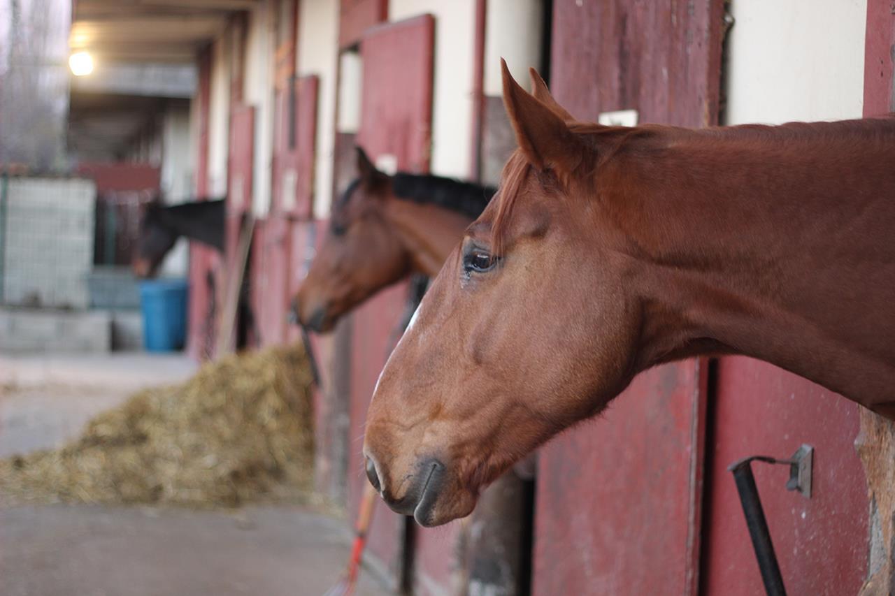chevaux-box
